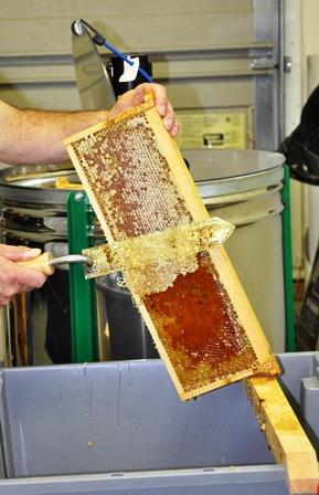Honey Harvest 6