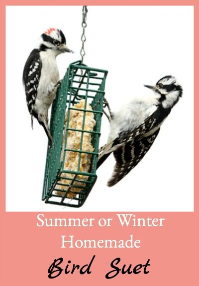 Here's an easy recipe for homemade bird suet that can me made and put out in either summer or winter - it holds up even in the heat.