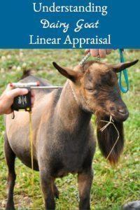 Understanding Dairy Goat Linear Appraisal