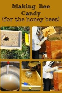 Making Bee Candy