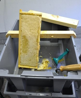 Honey Harvest Ready for Uncapping