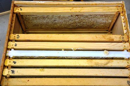 Honey Harvest Comb