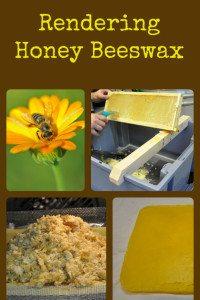 Oven Rendering Honey Beeswax
