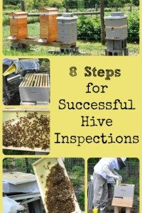 8 Honey Bee Hive Inspection Tips