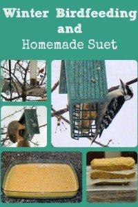 Feeding Wild Birds and Homemade Suet