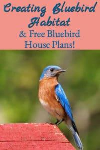 Creating Bluebird Habitat (& Free Bluebird House Plans)