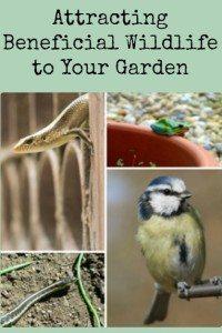 Attracting Beneficial Wildlife to Your Garden