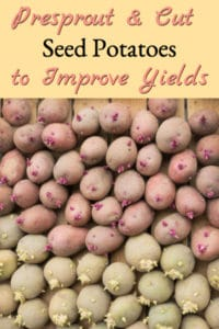 Pre-sprouting & Cutting Seed Potatoes