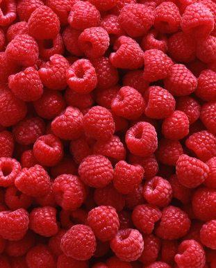 planting raspberry patch