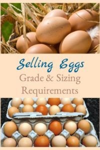 Selling Eggs – Grade & Size Requirements