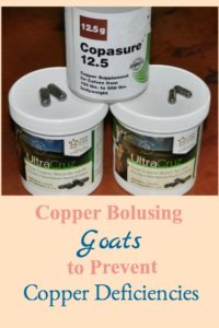 Copper Bolusing Goats to Prevent Copper Deficiencies