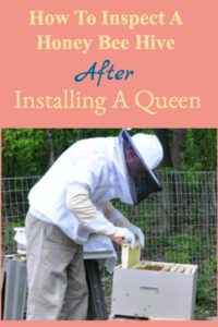 Inspect A Honeybee Hive After Installing A Queen