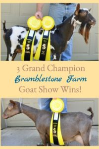 3 Grand Champion Goat Show Wins!