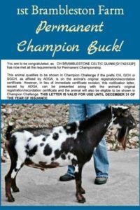 Bramblestone Champion Nigerian Dwarf Buck!