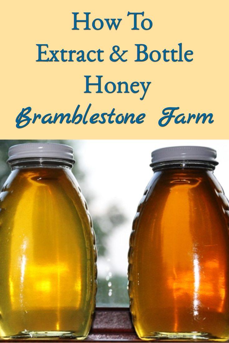 How To Extract & Bottle Honey
