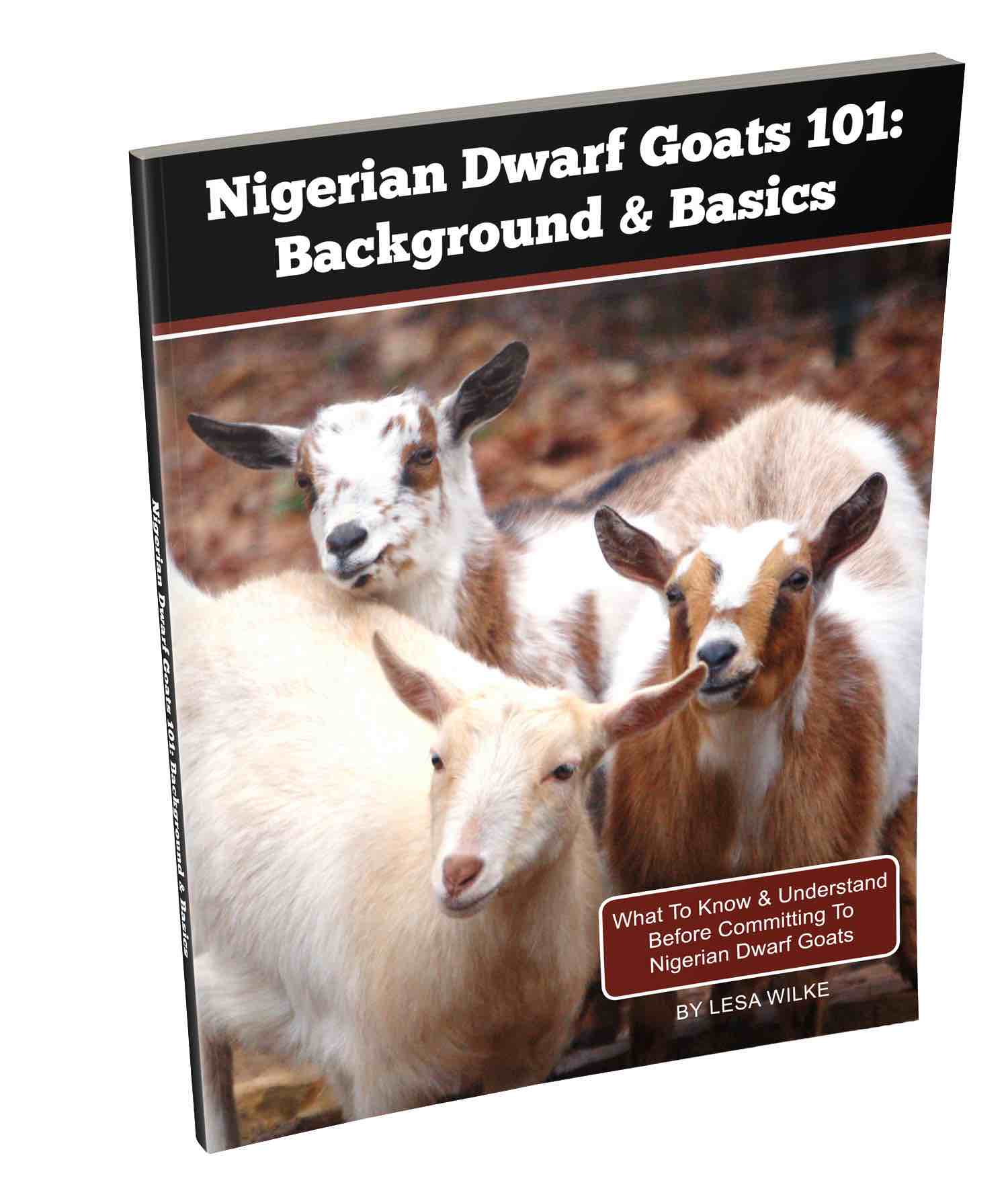 nigerian dwarf goats 101 background u0026 basics