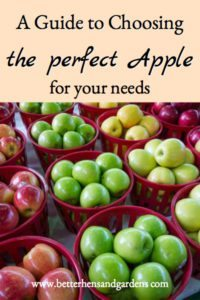 Apples – Which Variety for What?