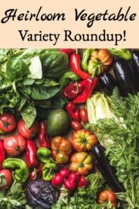 Heirloom Vegetable Variety Roundup!
