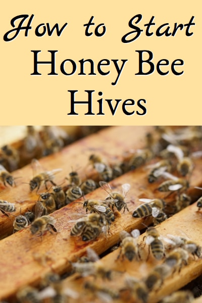 How to Start Honey Bee Hives (or How To Hive Package Honey Bees)