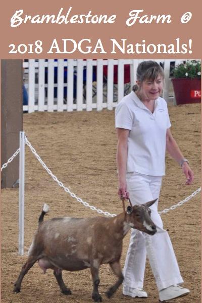 Bramblestone Farm Attends ADGA National Dairy Goat Show