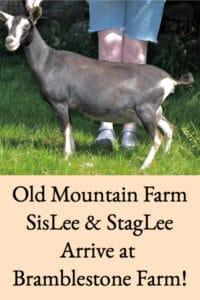 Old Mountain Farm SisLee and StagLee Join Bramblestone Farm