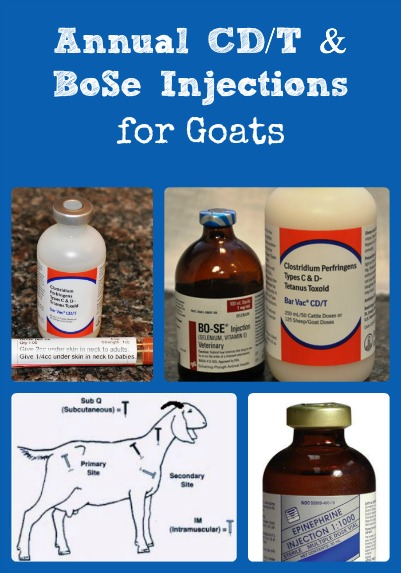Annual Goat Injections Collage via Better Hens and Gardens