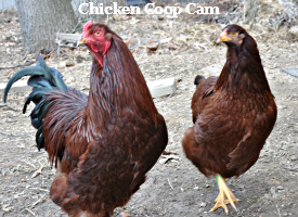 Chicken Coop Cam