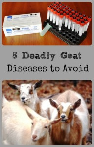 Goat Disease Collage